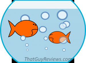 How to Acclimate your New Fish