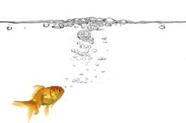 Your fish is healthier when properly acclimated.