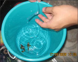 Acclimate your new fish using the drip method.