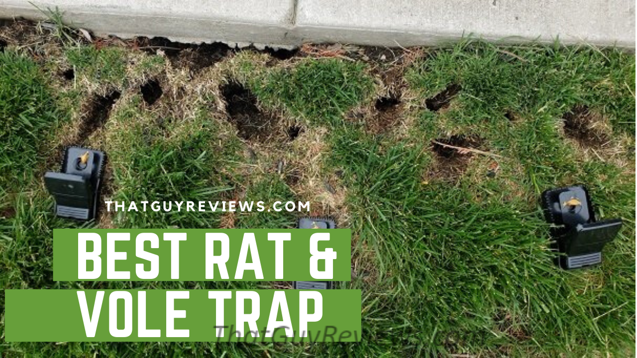 Best Rat and Vole Traps Review