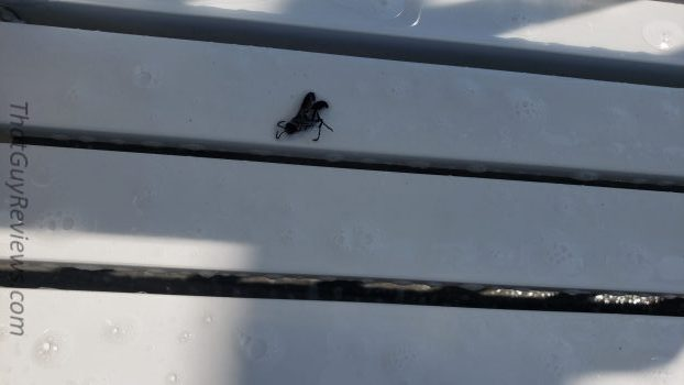 kill bees kill wasps solution