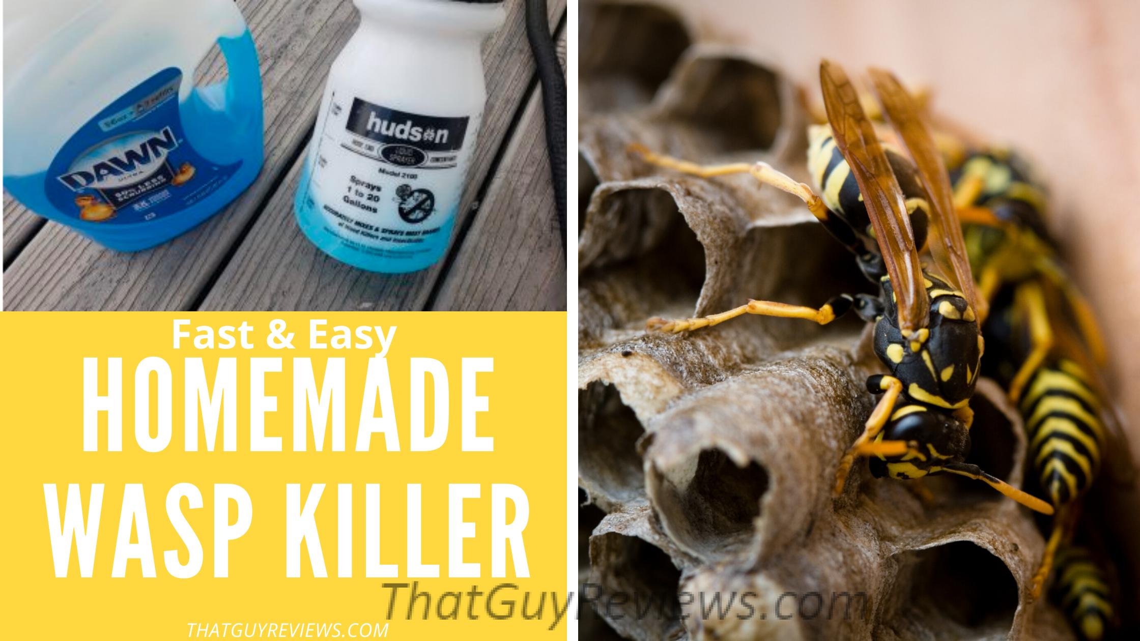 DIY Cheap Wasp Killer at Home