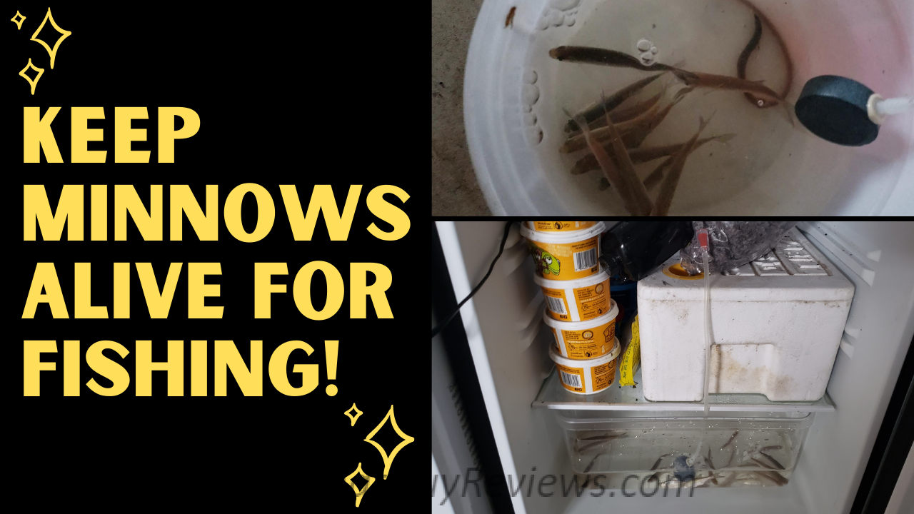 How to Keep Minnows Alive at Home
